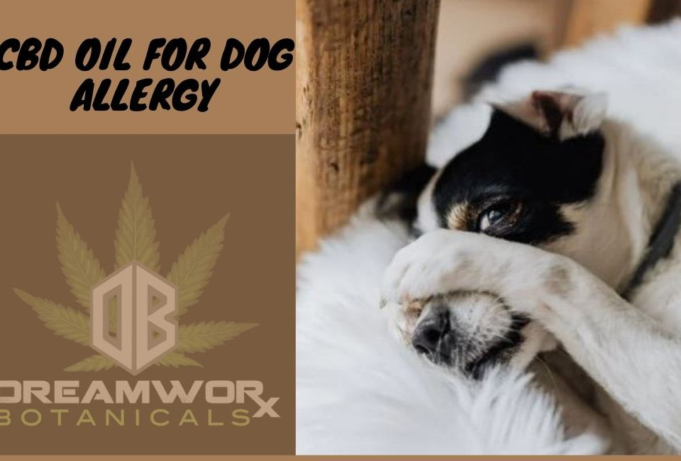 CBD OIL FOR DOG ALLERGY