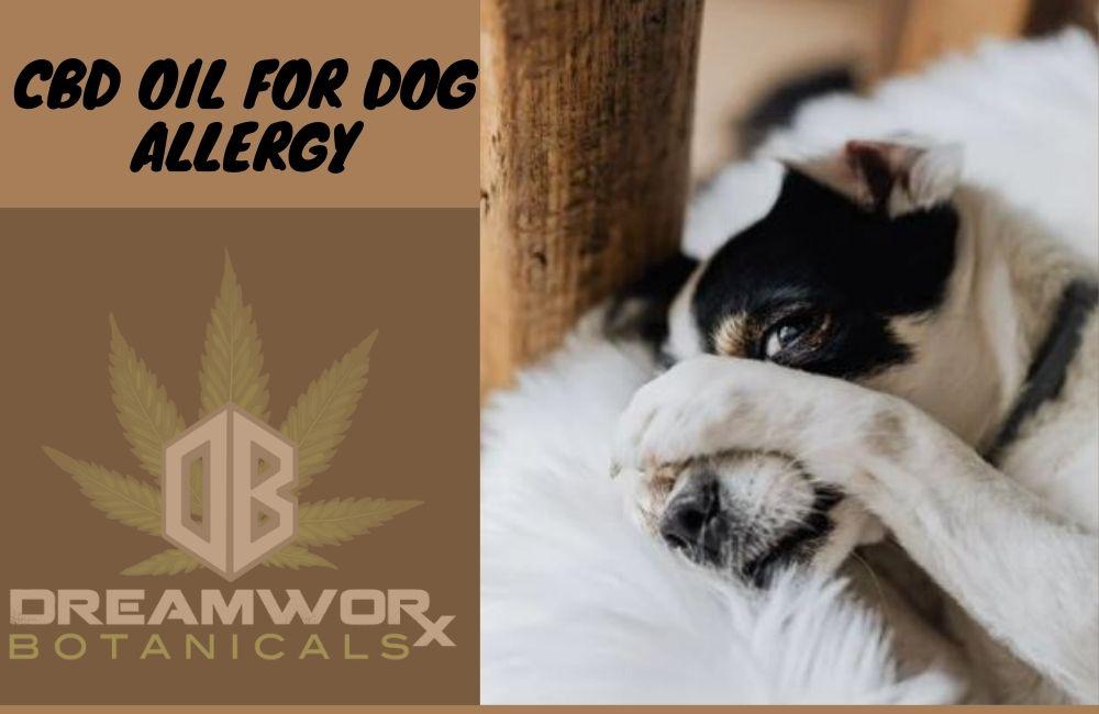 CBD OIL FOR DOG ALLERGY