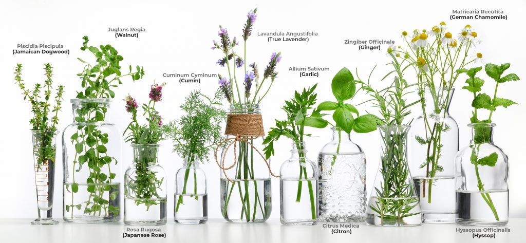 plant_based_medicne_botanicals_dreamworx_botanicals_oklahoma