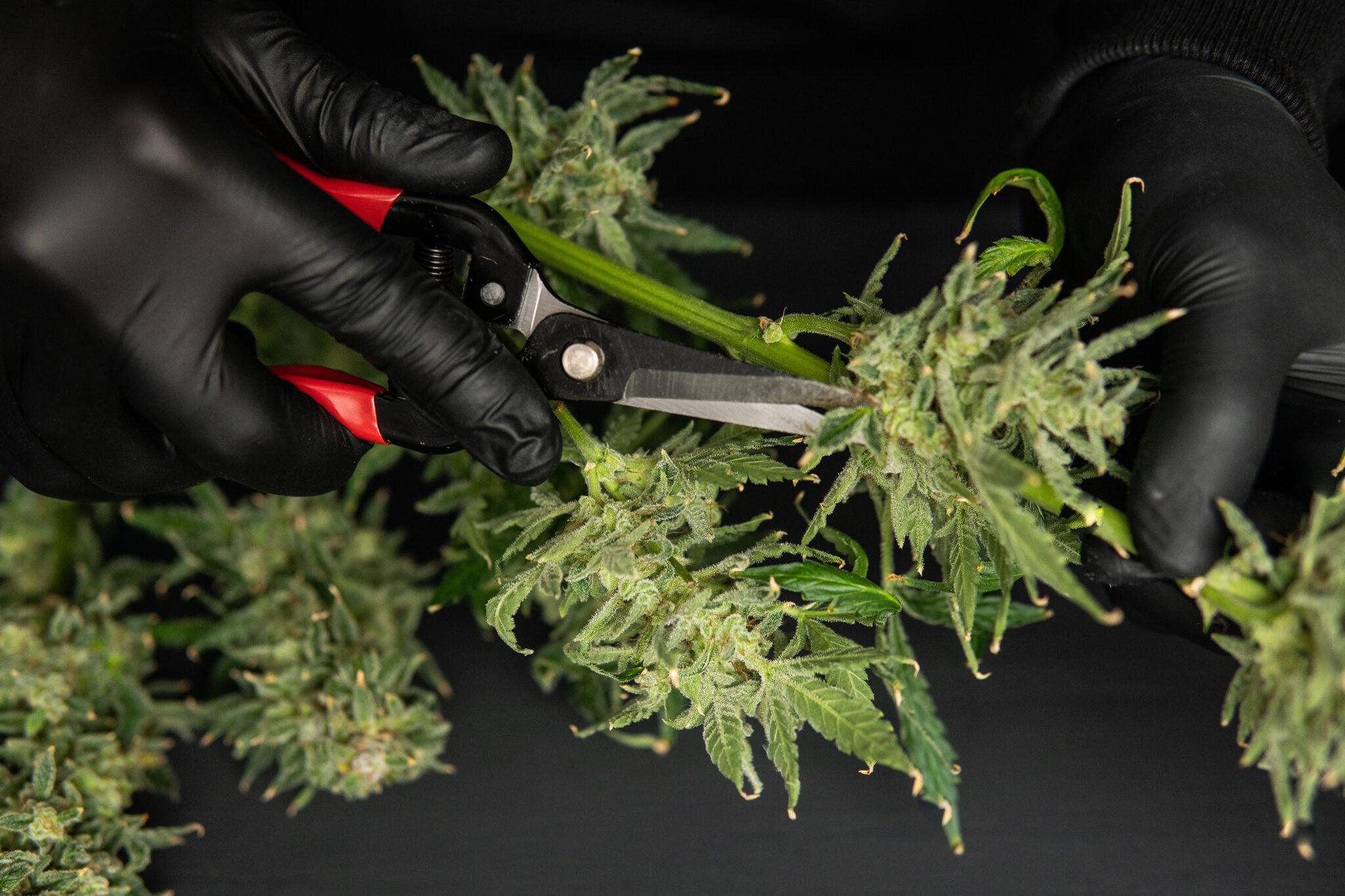 Background-Poteau-Dispensary-Cannabis-Tulsa-Oklahoma