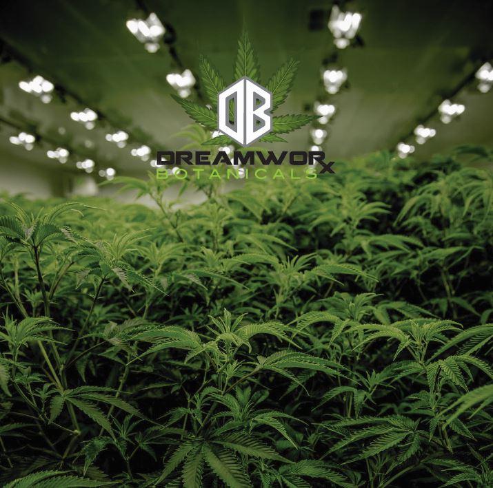 CBD Hemp Experts Matawan Bulk CBD Matawan New Jersey DreamWoRx Oklahoma cbd isolate wholesale high cbd hemp distillate