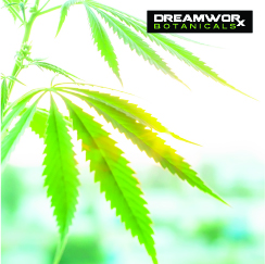 CBD Store Fort Worth - What Makes Quality CBD - Where Is CBD Store Fort Worth - What Makes DreamWoRx CBD Quality Fort Worth